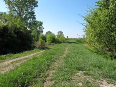 Un esempio tipico di percorso sull'argine della Livenza, tra Albina e Campomolino.