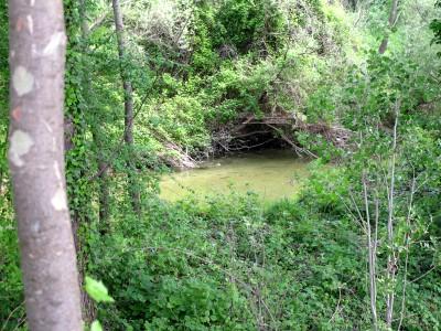 Tra argine e acque del Meschio, spesso s'interpone un po di vegetazione. A volte ci possiamo andare in mezzo a volte il sentiero non c'e' e ci tocca correre sull'argine. Poco male!