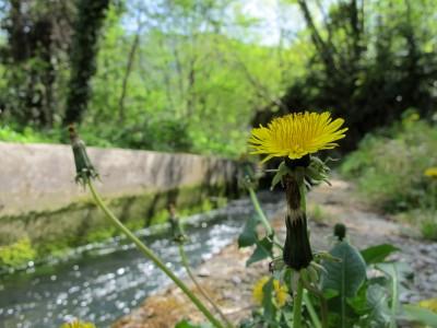 L'atmosfera da giardino segreto che avvolge le sorgenti del Meschio.