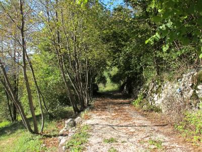 Il sentiero che sale dalle sponde del lago Morto verso Borgo Caloniche, una comoda sterrata.