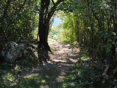 La fine del sentiero che porta a Borgo Caloniche di Sopra. L'ultimo albero sembra quasi chiudere la visuale per celare ancora un attimo la vista sul borgo.