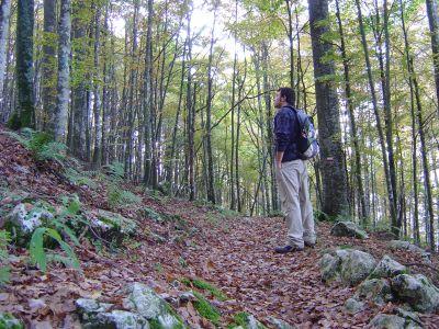 A volte 5 minuti di silenzio valgono molto più di 1000 discorsi. Nei boschi intorno a Malga Cercenedo.