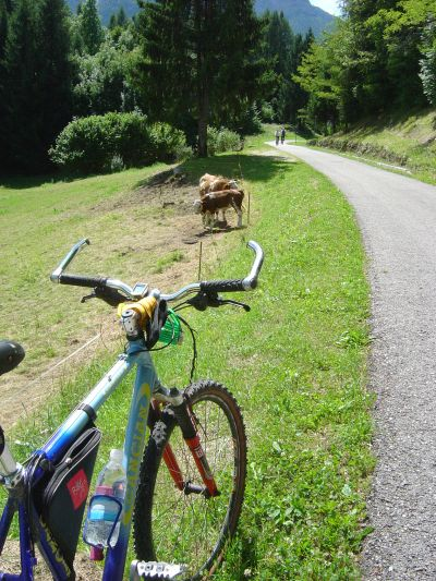 calalzo-cortina-mucca
