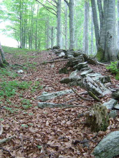 All'uscita dalla Foresta del Cansiglio, sul limitare dei prati del Monte Pizzoc, seguiamo un confine fatto di lastre di pietra.