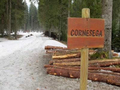 Meraviglioso bosco a Cornesega Bassa.