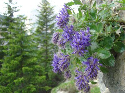 Siamo al primo contatto con la parete di roccia, al limitare del bosco. Una grotta mostra all'ingresso un gruppetto di fiori spontanei che quasi sembrano dare il benvenuto al visitatore.