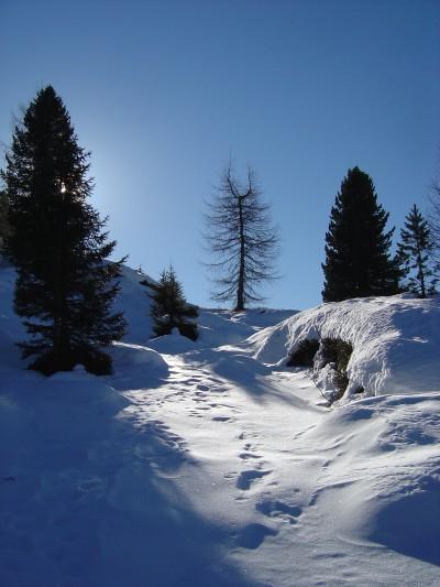 Sono oramai in vista dei Laghi del colbricon e dell'omonimo Rifugio Colbricon. Ne aprofitto per qualche foto al sole che gioca con la neve.