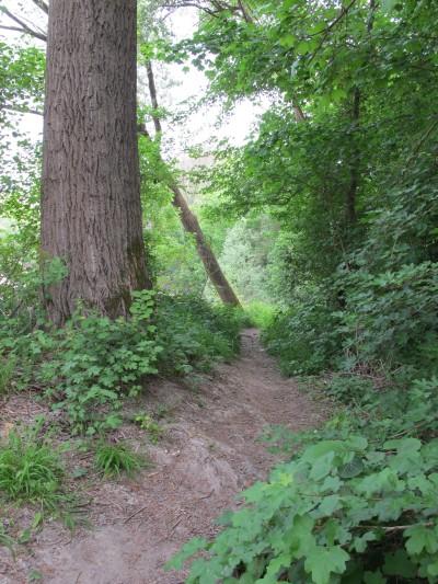 Il sentiero che per qualche centinaio di metri scorre rapido lungo l'argine sud del Meschio, fino alla casa degli Alpini. La zona è qui nota anche con il nome di Sassolino beach!