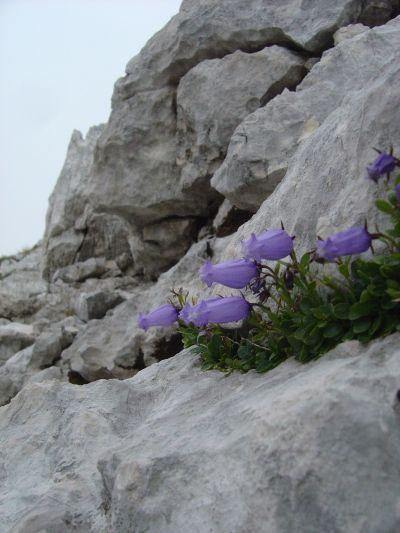 Scendendo mi fermo ad ammirare la roccia ed i fiori di questo gruppo montuoso. Roccia calcarea, con un grip decisamente elevato.