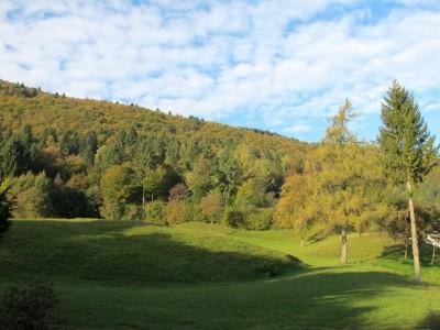 """I primi colori autunnali fanno capolino nel bosco presso la casa """"base""""."""