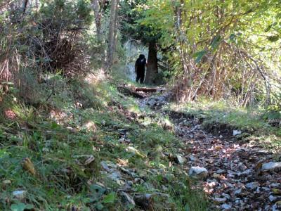 Il sentiero sale rapido e senza tregua, aiutandoci ad uscire velocemente dall'ombra della valle.