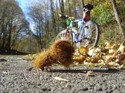 Ricci di castagno e foglie a cornice del mio passaggio in Dorsale, sul Montello.