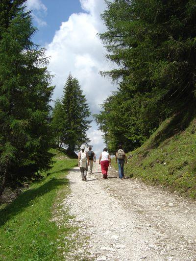 La sterrata che sale al Rifugio Citta' di Fiume, segnavia 467.