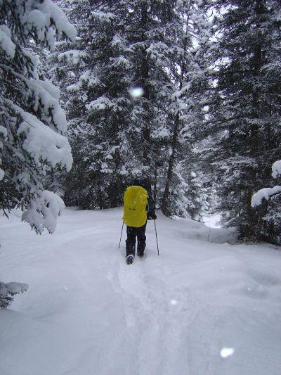 L'esperto traccia la via lungo la discesa verso Pala Favera. La neve fresca non sempre rende il tracciato facile da disegnare. In compenso prossiamo provare a far scivolare un po le ciaspole sulla neve fresca... un pizzico di divertimento in piu'!