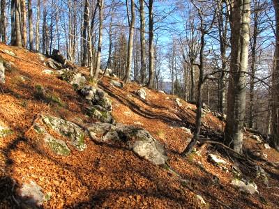 Si procede immersi nei colori autunnali della foresta del Cansiglio.