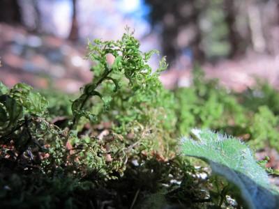 Si entra in bosco e qui fanno capolino le prime meraviglie del sottobosco.