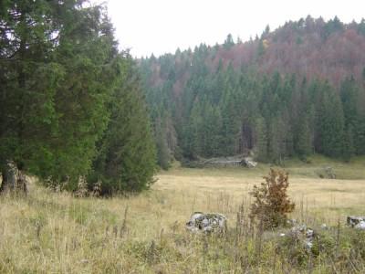 La radura poco lontana dalla Candaglia, dove il percorso si perde in bosco.