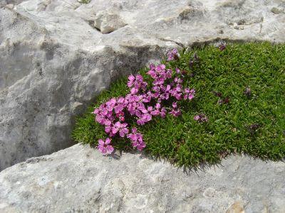Altri fiori lungo il sentiero per il Rifugio Semenza.