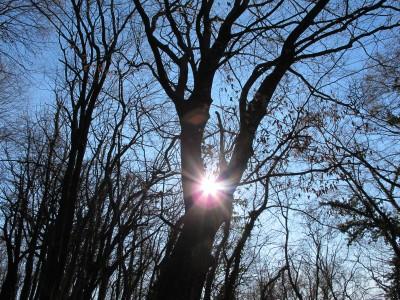 Eccolo, il sole fa capolino tra i rami spogli. Attimi che ripagano della fatica e del freddo patiti.