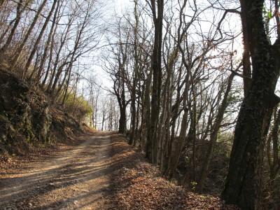 Il sentiero procede con pendenza regolare, tra boschi in veste tardo autunnale.