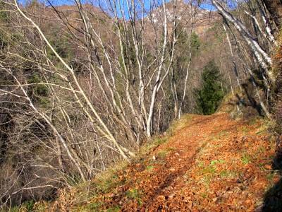 Il sentiero autunnale, inizialmente dolce, va poi via via aumentando di pendenza.
