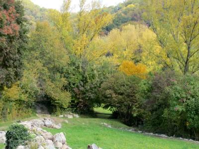 Il bosco ed i suoi colori, appena alle spalle di Case Sassi.