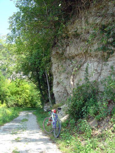 La roccia fasciata di rami e radici che per un breve tratto ingoia il canale di Soccher.