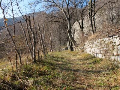 Dopo aver sfiorato la base del secondo tornante, il sentiero Zanin conduce dal prato al bosco.