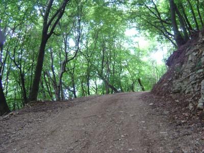 La sterrata ombreggiata che sale in bosco.