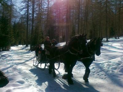 Per i più comodi, in Val Fiscalina si può anche usufruire del servizio slitta, trainata da una pacifica coppia di cavalli.