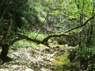 Piccoli angoli di bosco che sembrano appartenere a qualche libro di fiabe, quasi fosse normale vederli popolati da fate e folletti.