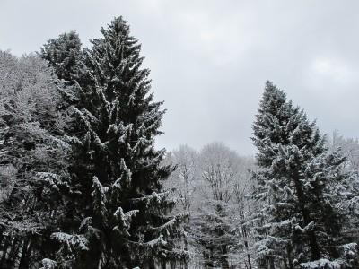 Sempre più nel fitto del bosco, nel fitto della foresta del Cansiglio.
